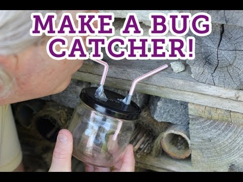 How to make a bug catcher -- Eden Project