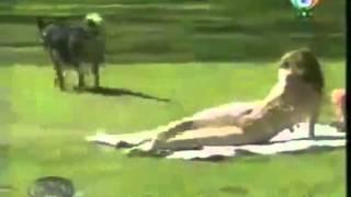 Собака маньяк, очень нравятся женщины!!!!