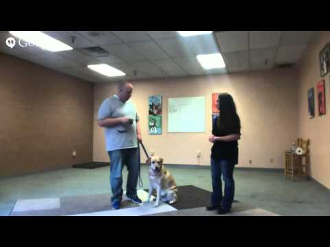 How to Work With Dog Reactivity and Aggression