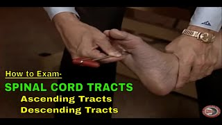 How to Exam Spinal Cord Tracts