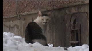 В Череповце возобновляют отлов бездомных животных