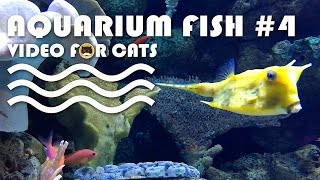 FISH VIDEO FOR CATS - Aquarium Fish #4. Entertainment Video for Cats to Watch.