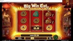 Online Casino Club - Big Win Cat