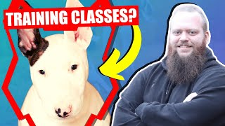 SHOULD MY BULL TERRIER GO TO PUPPY TRAINING CLASSES
