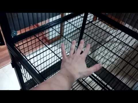 Ferret Nation Cage Review + Modifications, Tips & Tricks