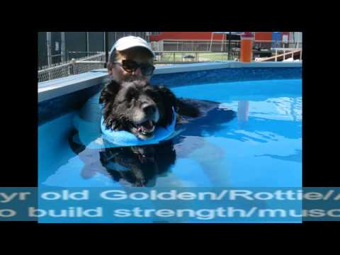 Dogs swimming for injury recovery, fun & all around general good health