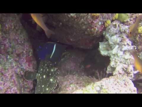 Derek's Galapagos Adventure