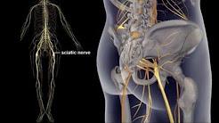 hqdefault - Etoshine Mr Back Pain
