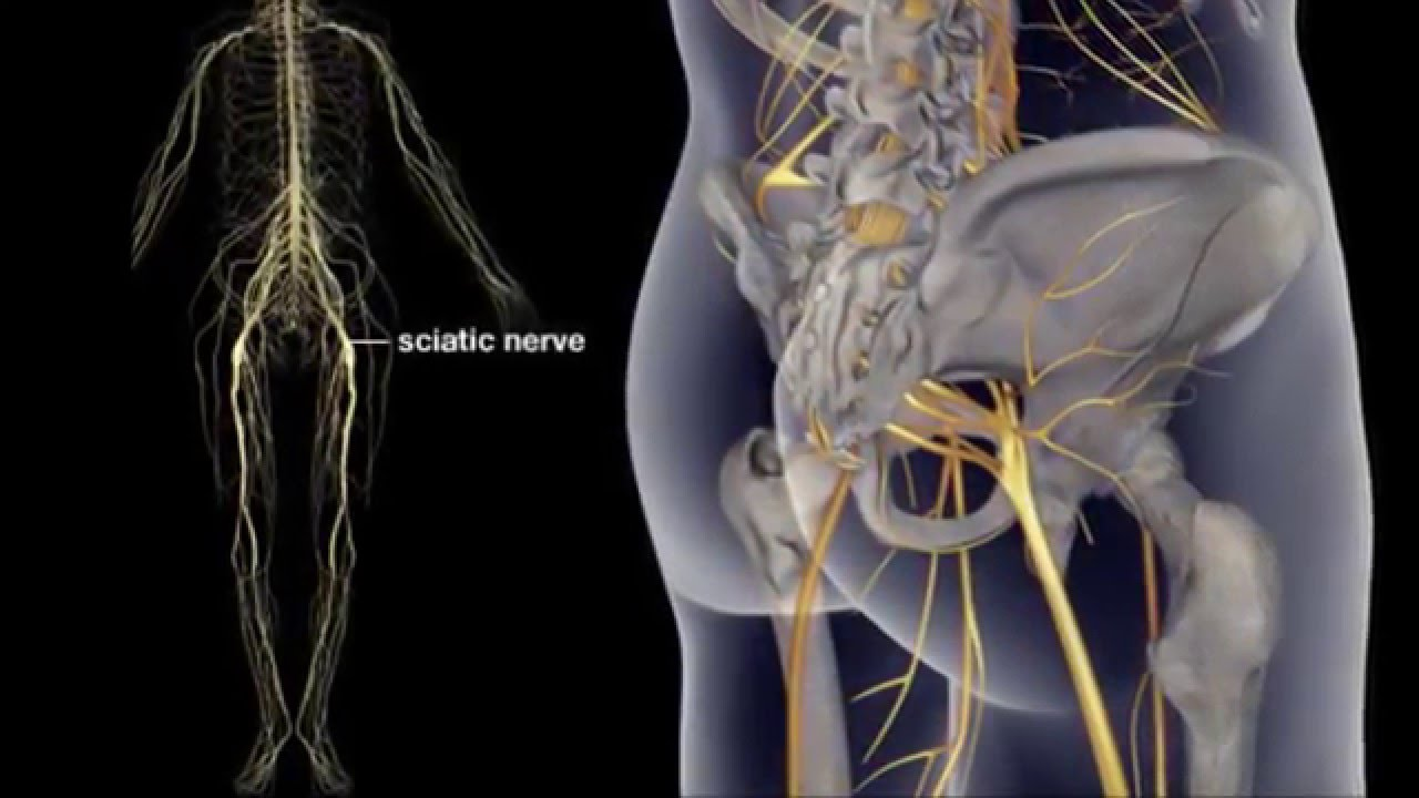 what is sciatic nerve causes  sciatic pain relief
