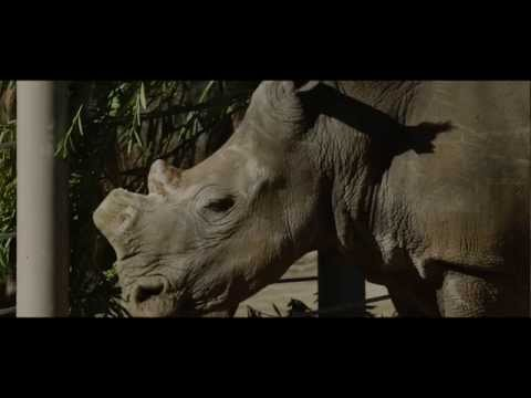 Saving Rhinos from South Africa