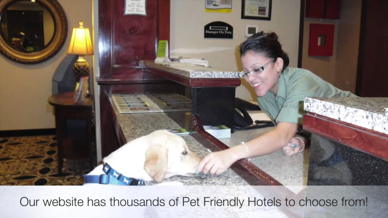 Pet Friendly Hotels Hilton Head Island South Carolina