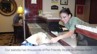 Pet friendly hotels hilton head island, south carolina