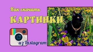 Как скачать картинки из Instagram