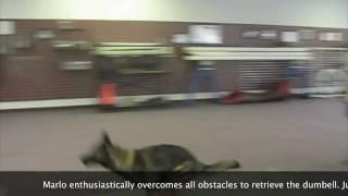 Dog Training: How To Teach Your Dog To Retrieve Over High Jump