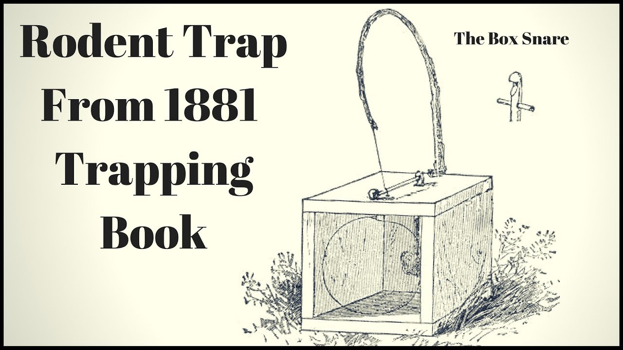 rodent-tap-from-a-1881-book-the-box-snare-trap-mousetrap-monday