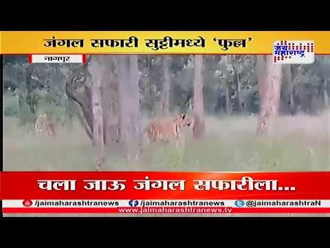 Nagpur: Pench Tiger Jungle safari tourist spot