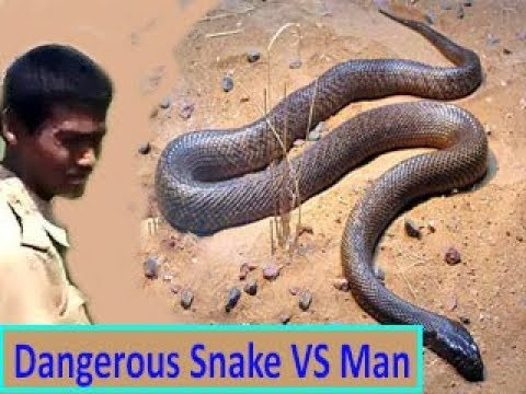 Man VS Snake : best awesome video forever (Top skills of How to Control a Dangerous Snake)