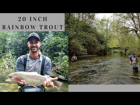 Giant 20 Inch Rainbow Trout Brevard North Carolina