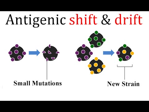 Antigenic Drift And Shift For Corona Virus And Oth Youtube