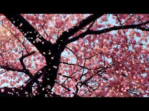 Instrumental Music: Kaoru Wada - Affections Touching Across Time II