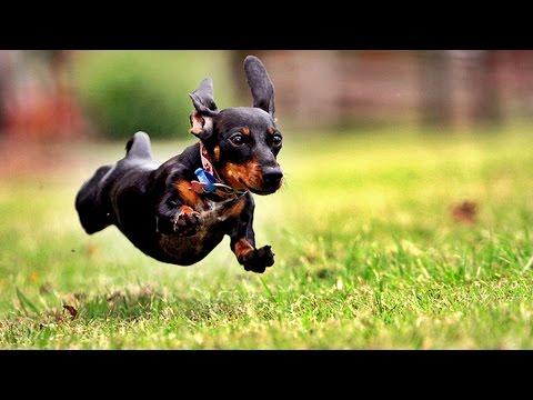 Собаки весело делают сальто