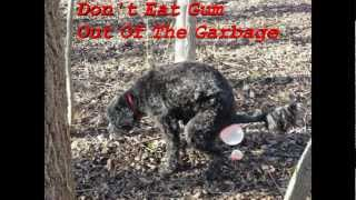Dog  Eats Gum Out Of The Garbage