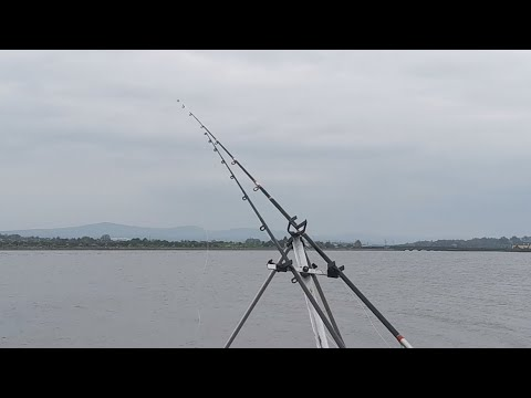 Estuary Bass And Stingray