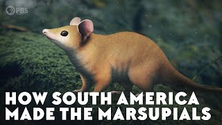 How South America Made the Marsupials