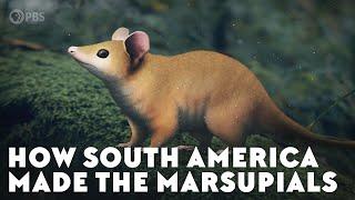 How South America Made the Marsupials