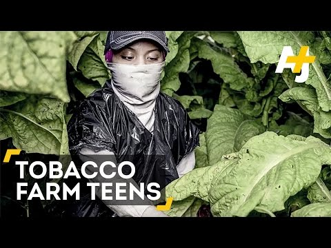 Teens Are Doing Dangerous Work On Tobacco Farms
