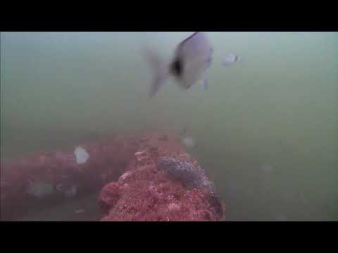Sharks in the Atlantic Cam 05-19-2017 10:00:07 - 10:59:57
