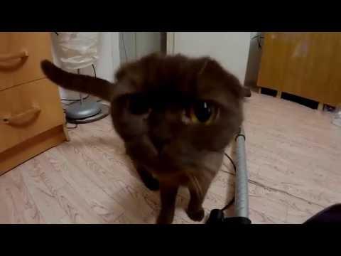 Когтеточка, апгрейд Домика для кошки своими руками