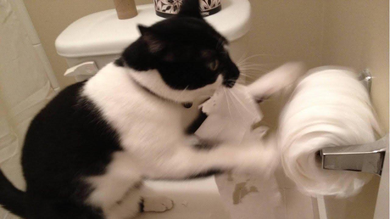 Я РЖАЛ ПОЛЧАСА. Смешные Коты и Собаки. ПРИКОЛЫ С ЖИВОТНЫМИ. 25 | Программа Автоматического Заработка Евро