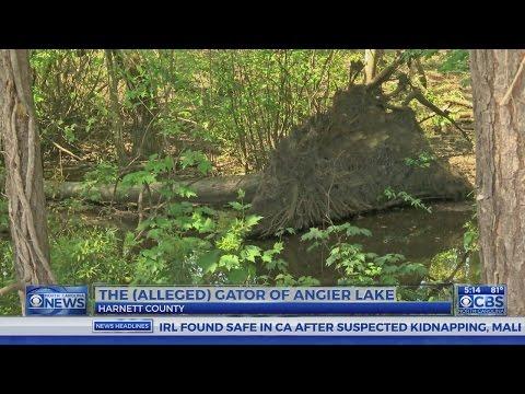 Rumors swirl of a gator in a Harnett County lake