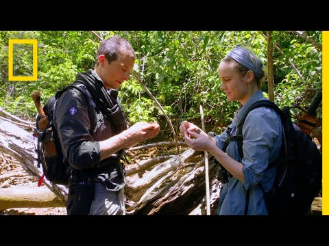 Brie Larson Eats A Rhino Beetle | Running Wild With Bear Grylls