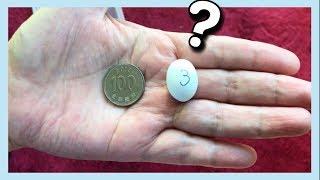 동전 보다 작은 알에서 나온 생명체? 파충류 키우기 […