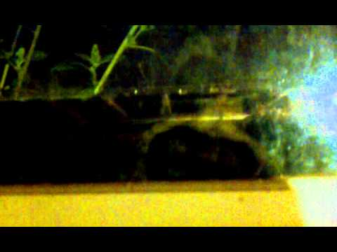 Frogs in our basement window.