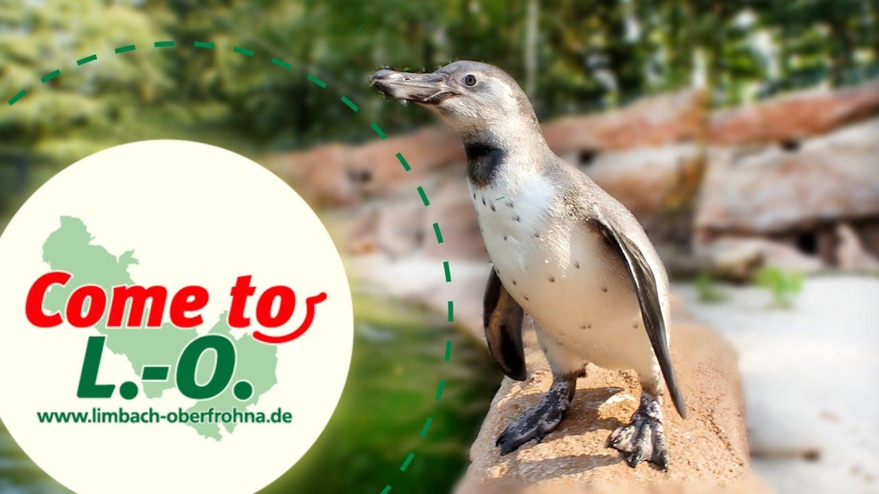 Pinguinland Im Amerika Tierpark Limbach Oberfrohna Come To L O