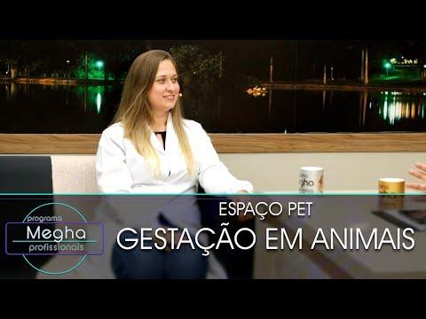 Gestação Em Animais | Dra. Luciana Fonseca | Pgm Megha Profissionais N°643