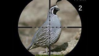 Repeat youtube video Caza De Palomas Y Perdices Con Rifle De Aire Parte 2
