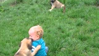 Baby And Kangal Dogs.avi