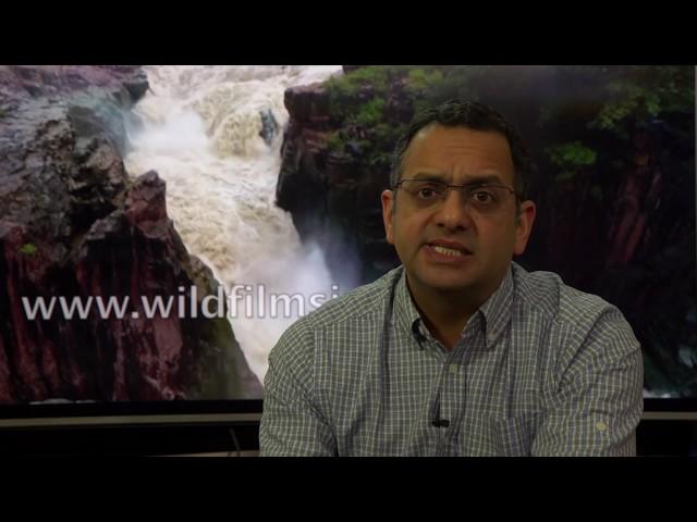 Amazon Business customer profile of wildfilmsindia