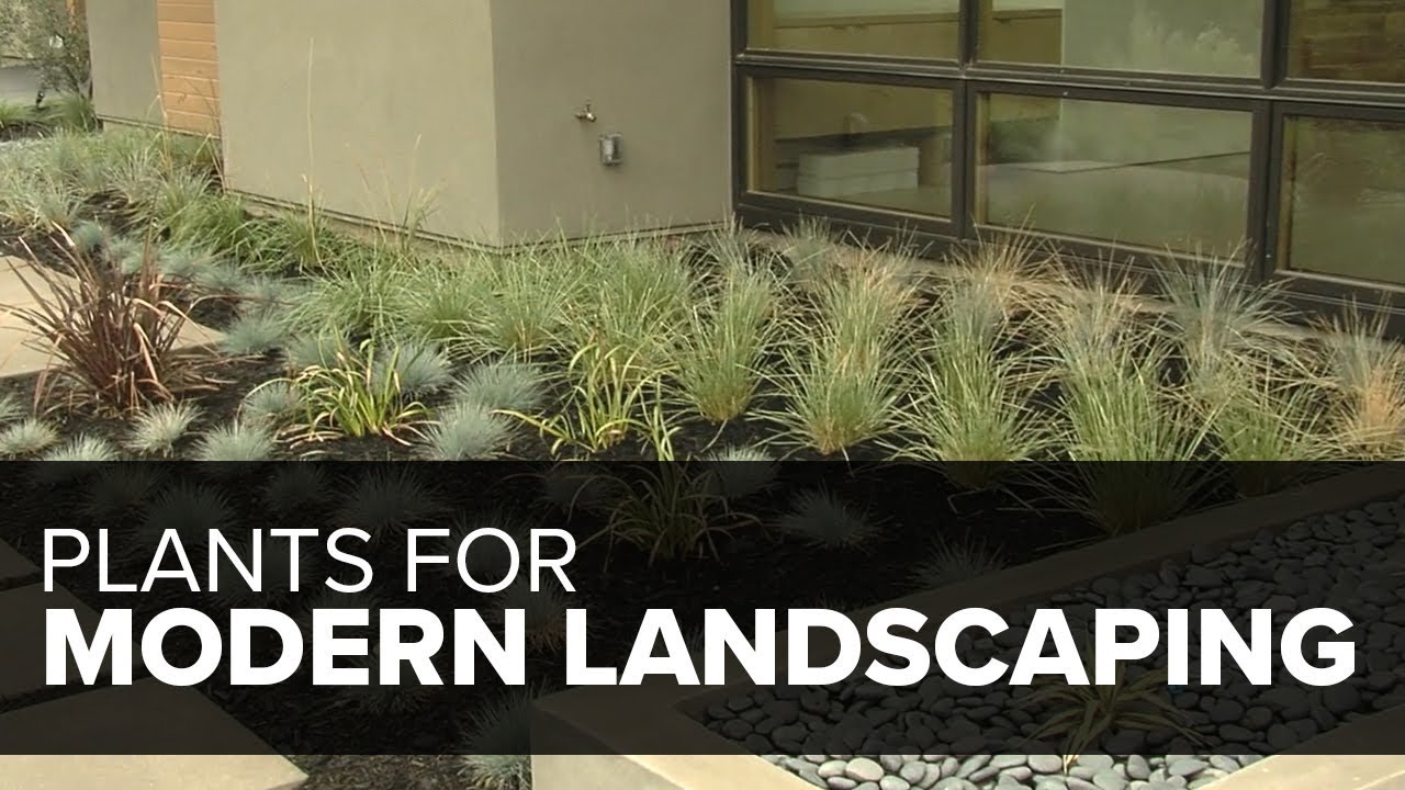 13 Plants For A Modern Garden Garden Design