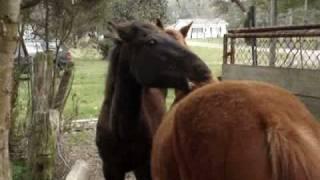 Weird Horses