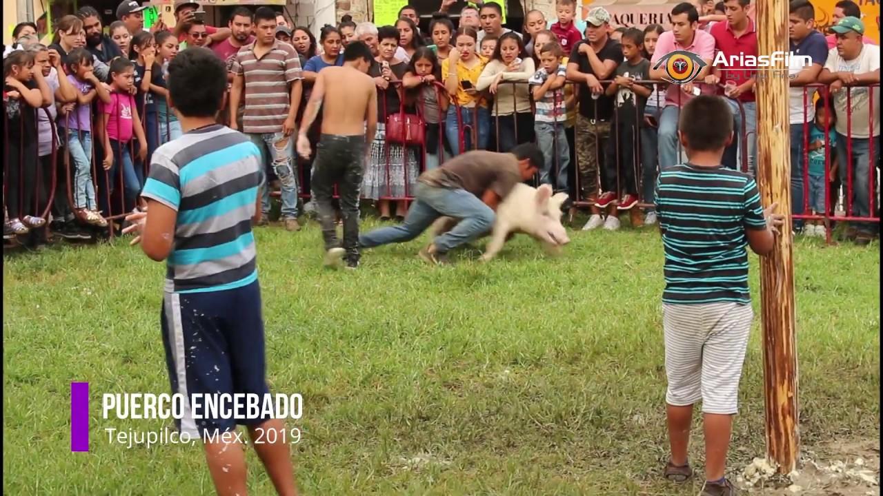 Download Concurso Palo y Puerco Encebado Tejupilco 2019
