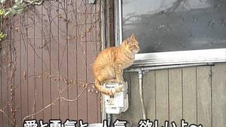 到底、本家のネコカラにはかないませんが 笑いほぼ無し、癒し系ネコカラ...
