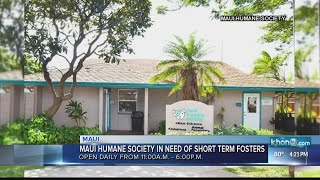 Maui Humane Society seeks foster homes for Thanksgiving