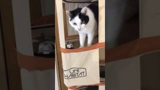 Cats ordering by bell from their tower
