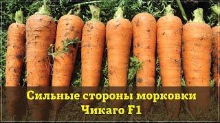 Сильные стороны моркови Чикаго F1(Почему стоит выращивать морковь Чикаго F1? Из этого видео Вы узнаете все ее сильные стороны. Купить Чикаго..., 2015-07-13T13:58:37.000Z)