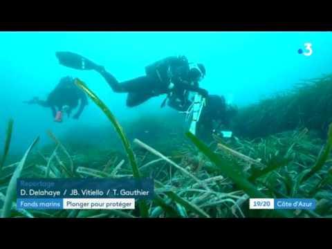 NaturDive : un observatoire citoyen de la biodiversité marine sur la Côte d'Azur